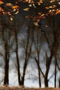 500px / Autumn Trees by Grzegorz Wiernik