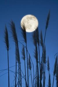 Full Moon Feather Fluffer (by Lee Sie) | Phantasma