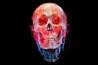 Bodies & Skulls on