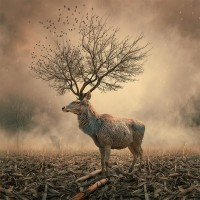 Surreal Photo Manipulations by Caras Ionut | Colossal
