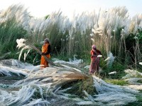 India Picture -- Harvest Photo -- National Geographic Photo of the Day