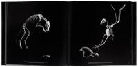 Exploration of Skeletons by Patrick Gries – Fubiz™