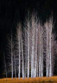 e3c37a7576030120326cbbe7803a5a20.jpg (Image JPEG, 500x632 pixels) - Redimensionnée (96%)