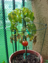 Container Gardening update |