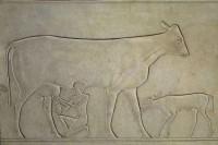 traite-dune-vache-veau-attache-a-sa-patte-detail-du-sarcophage-de-la-princesse-kaouit-datant-du-debut-du-regne-de-mentouhotep-ii-xie-dynastie-2061-a-2010-av-j-c.jpg (450×300)
