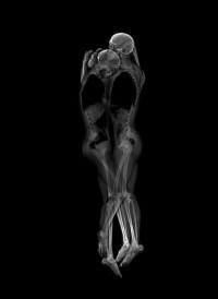 Intimate X-Ray Portraits by Ayako Kanda & Mayuka Hayashi | 123 Inspiration