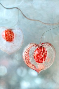 500px / Winter baubles by Mandy Disher
