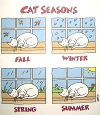 Cat Seasons | cats 2