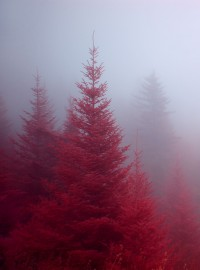 Red Forest - Imgur