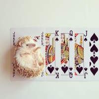 The Cutest Little Hedgehog in the World – Fubiz™
