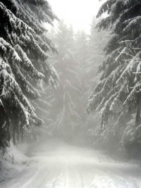 forest in Winter | Romantic winter