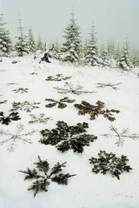 Pine Snowflakes | Romantic winter