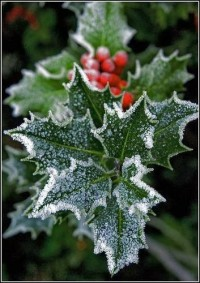 Deck The Halls With Boughs of Holly...   The Joys Of Christmas