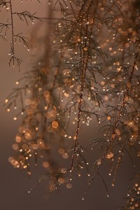 Branches | Winter Inspiration