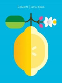 Fruit: Lemon Art Print by Christopher Dina | Society6