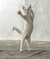 | Cats