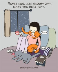 Cat versus human ... | Cats