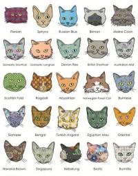 cats ! | Cats