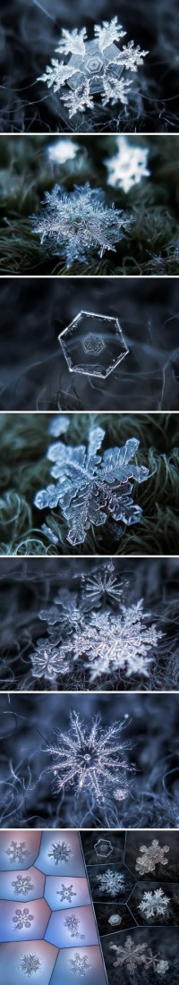 lovely snowflakes From Thing of Interest | Winter