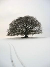Winter Wonderland | Winter