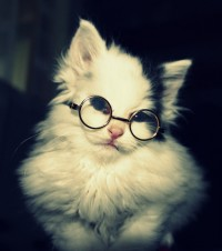 14 Cats That Are Way Geekier Than You