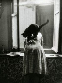 A Harem Of Peacocks (luzfosca: Willy Ronis Untitled, Undated From...)
