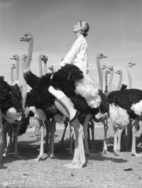 Norman Parkinson - Wenda and Ostriches - Photos - Photohab - Photographer's Portfolios