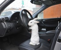 9GAG - Just get in the car, Alice. I'll explain on the way.