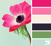 Design Seeds® | for all who ? color