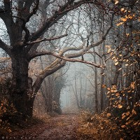 Nature Photography by Oer-Wout | InspireFirst