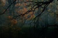 The Deeper you go the Darker it get's - Forests Wallpaper 965747 - Desktop Nexus Nature