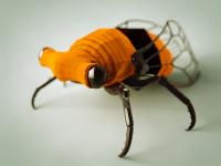 Cicada by Joe Ski