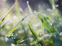 Cool Dew On Grass - Stock Photo - FreebiesXpress
