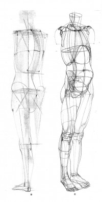Pin by Einar Yoris on Anatomy References for Artists | Pinterest