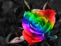 flowers,rainbows flowers rainbows – flowers,rainbows flowers rainbows – Flowers Wallpaper – Desktop Wallpaper
