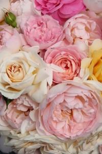 Me encantan las rosas en esos tonos | Me gusta | Pinterest