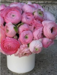 Gotta love pionies. | Flowers | Pinterest