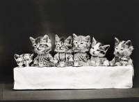 LOLCats by Harry Whittier Frees | Photographist - Photography Blog
