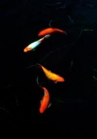 BjSRKSTIcAERoi4.jpg:large (Image JPEG, 236×353 pixels)
