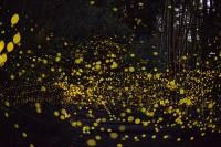 tsuneaki hiramatsu - Bing Images