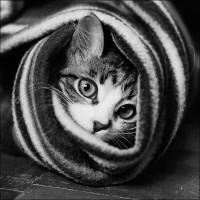 funny cat by ~govorit-vsluh
