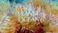 Planet Ocean film - Official Trailer - YouTube