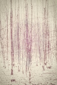 Magenta woods Art Print by Pascal | Society6