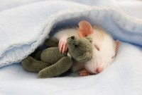 24 Animals Sleeping And Cuddling With Stuffed Animals | Bored Panda