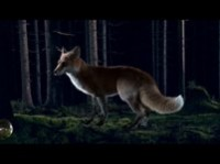 Ylvis - The Fox - Making of on Vimeo