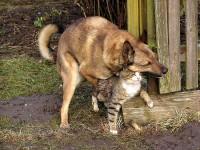 Wyniki Szukania w Grafice Google dla http://www.fridayphotos.com/fridays/friday-november-26-2010/i.hate.cats.15072004.jpg