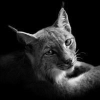 BW Animals Portraits by Lukas Holas | Fine Art Photography