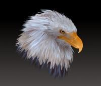 eagle02.jpg (867×732)