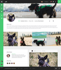 peti - networking site for pets on