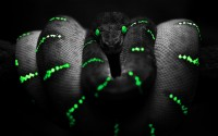 nature black dark animals snakes python boa exotic - Wallpaper (#254477) / Wallbase.cc